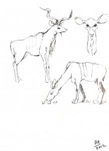 Some type of deer.