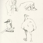 Various Animal Studies
