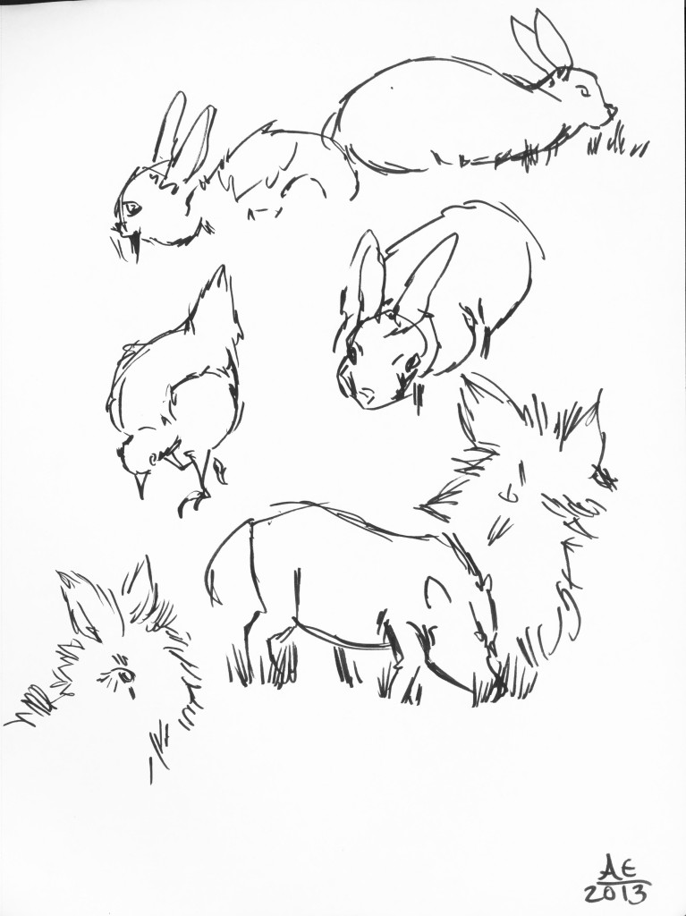 Bunny and Pig Studies