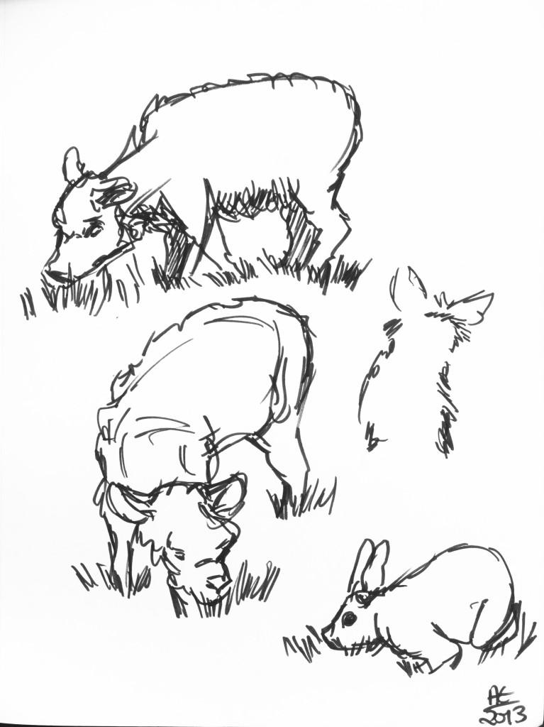 Sheep and Bunny Studies