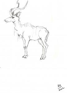 One last deer.