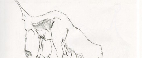 Anteater Study 02
