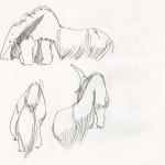Anteater Studies