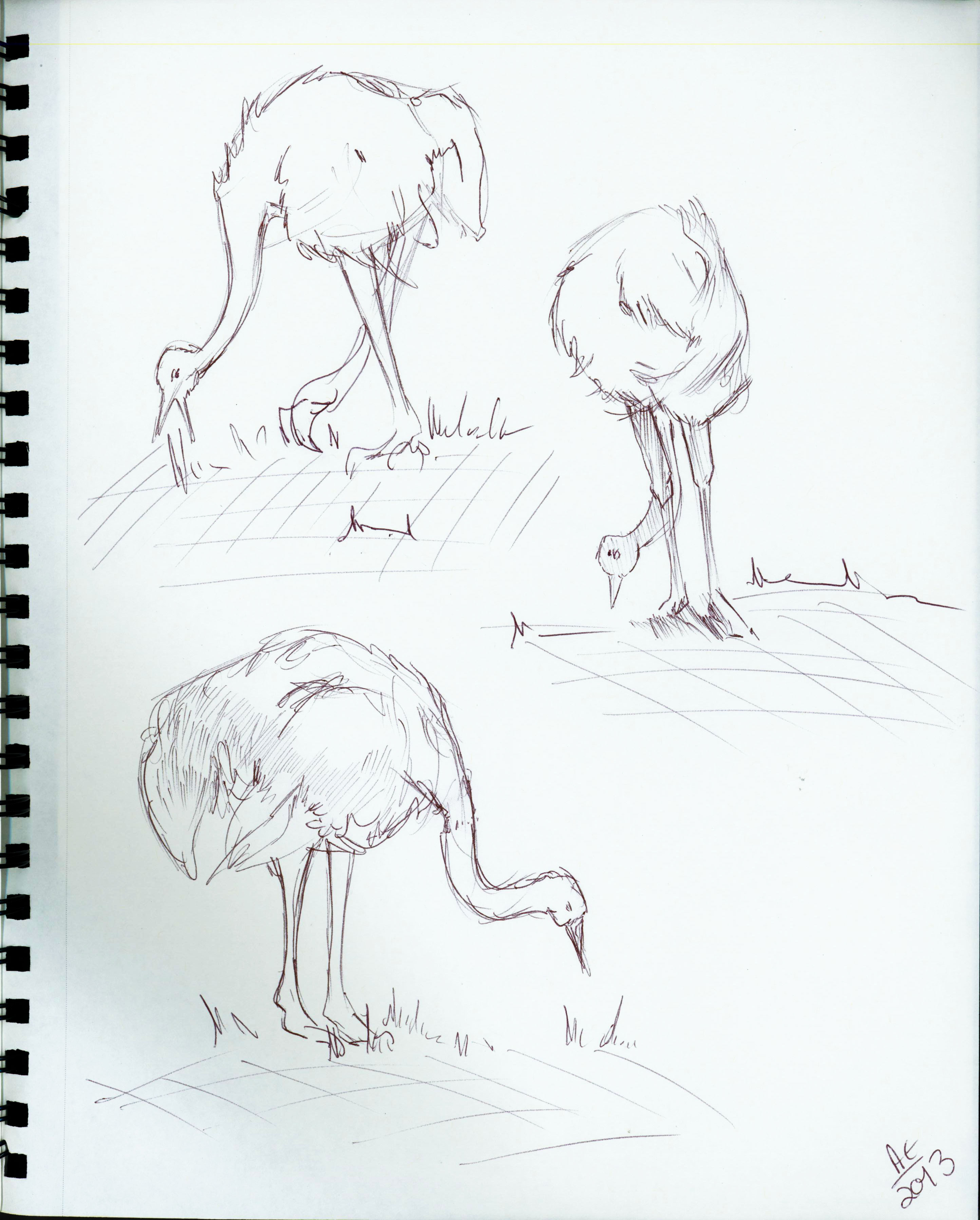 Ostrich Studies 3